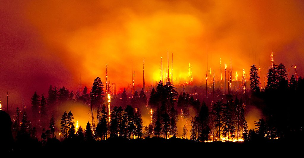 BT496N 2009 Wildfire in Yosemite National Park