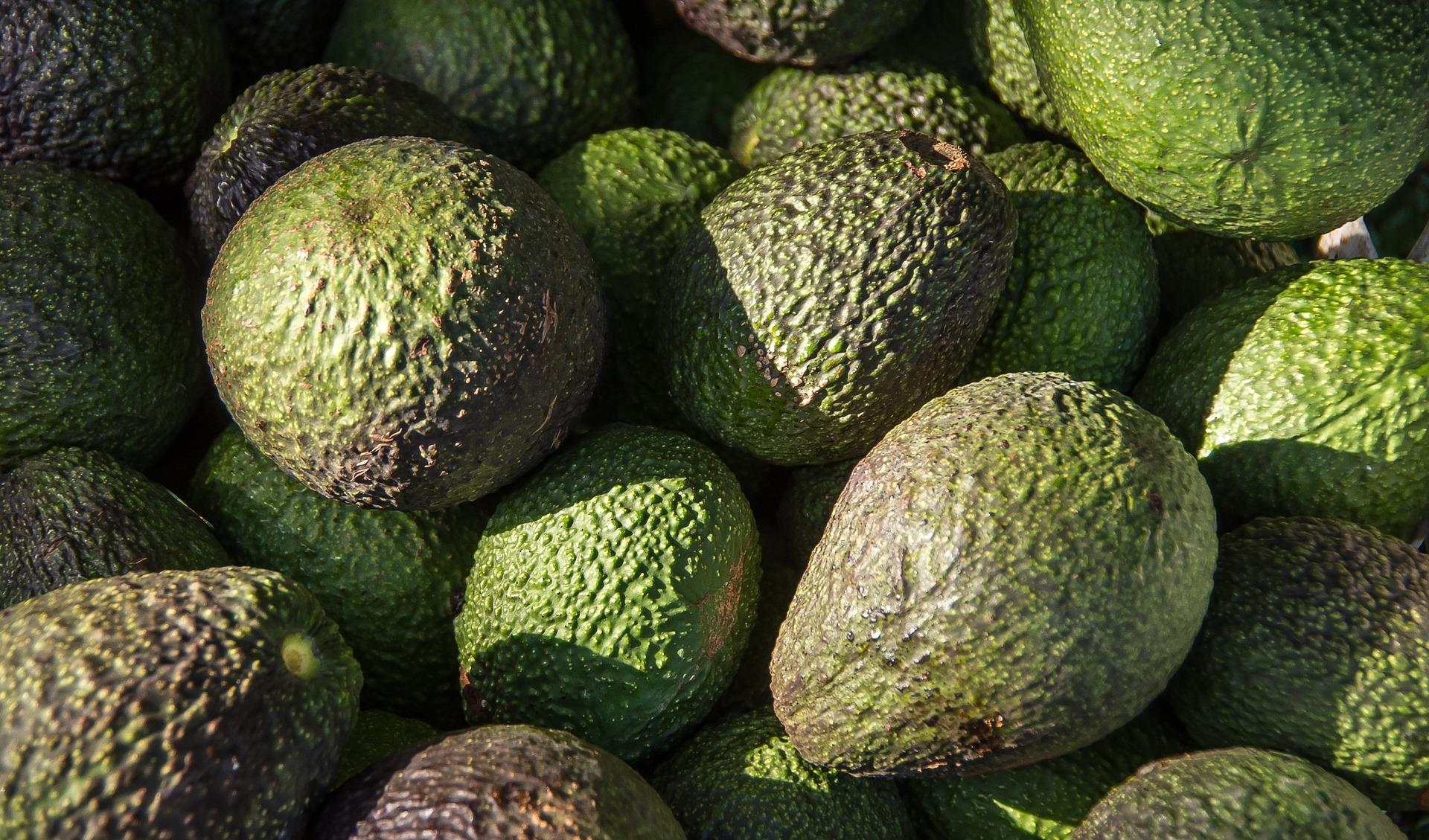 hass-avocado-1164173_1920