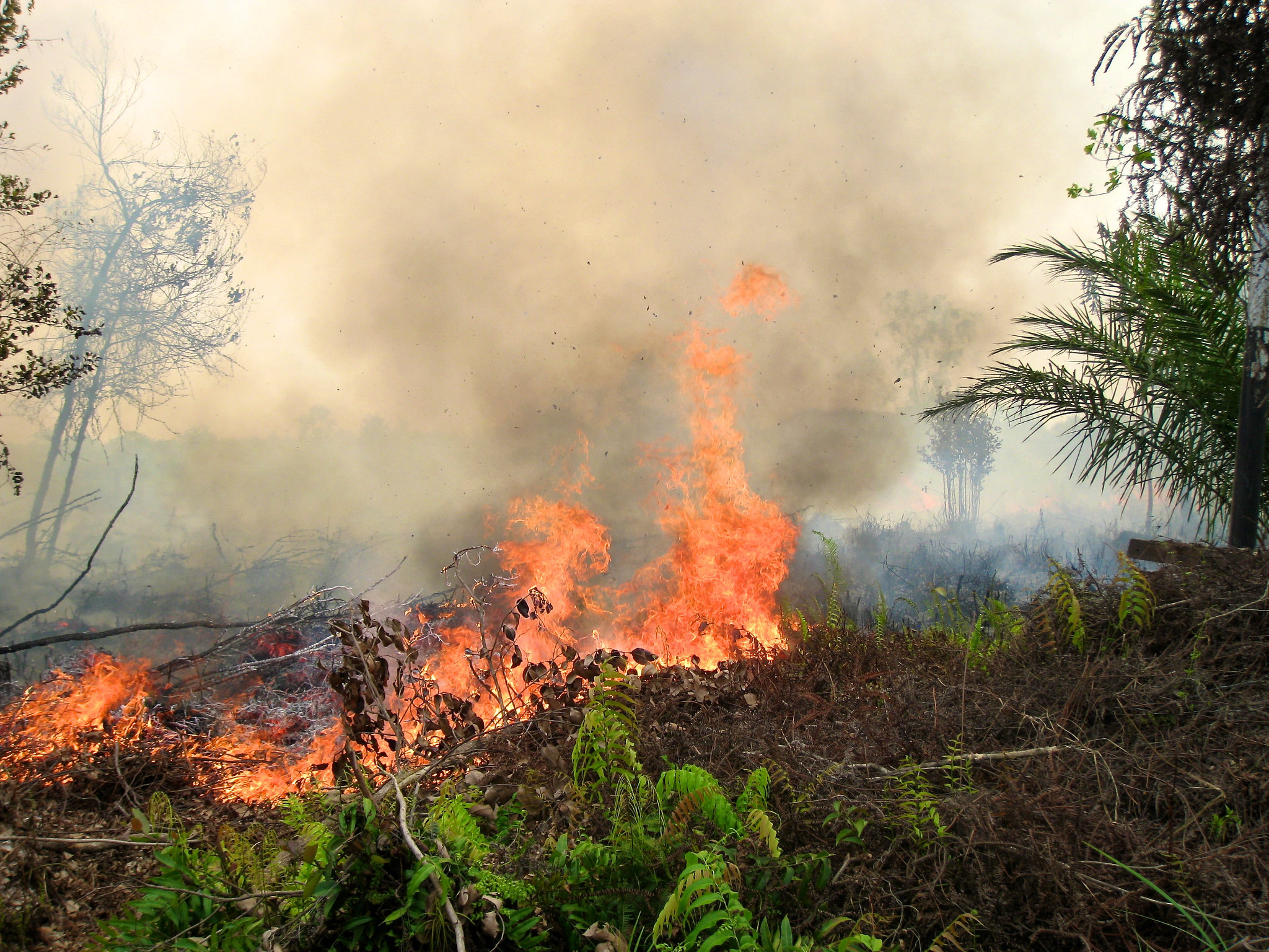 forest_fire_CIFOR