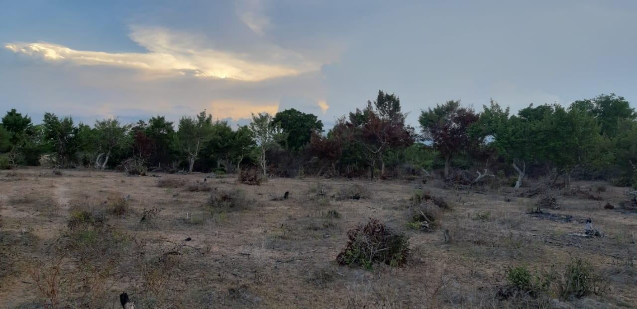 Deforestation event in Kinniya Sri Lanka, detected by Forest Watcher
